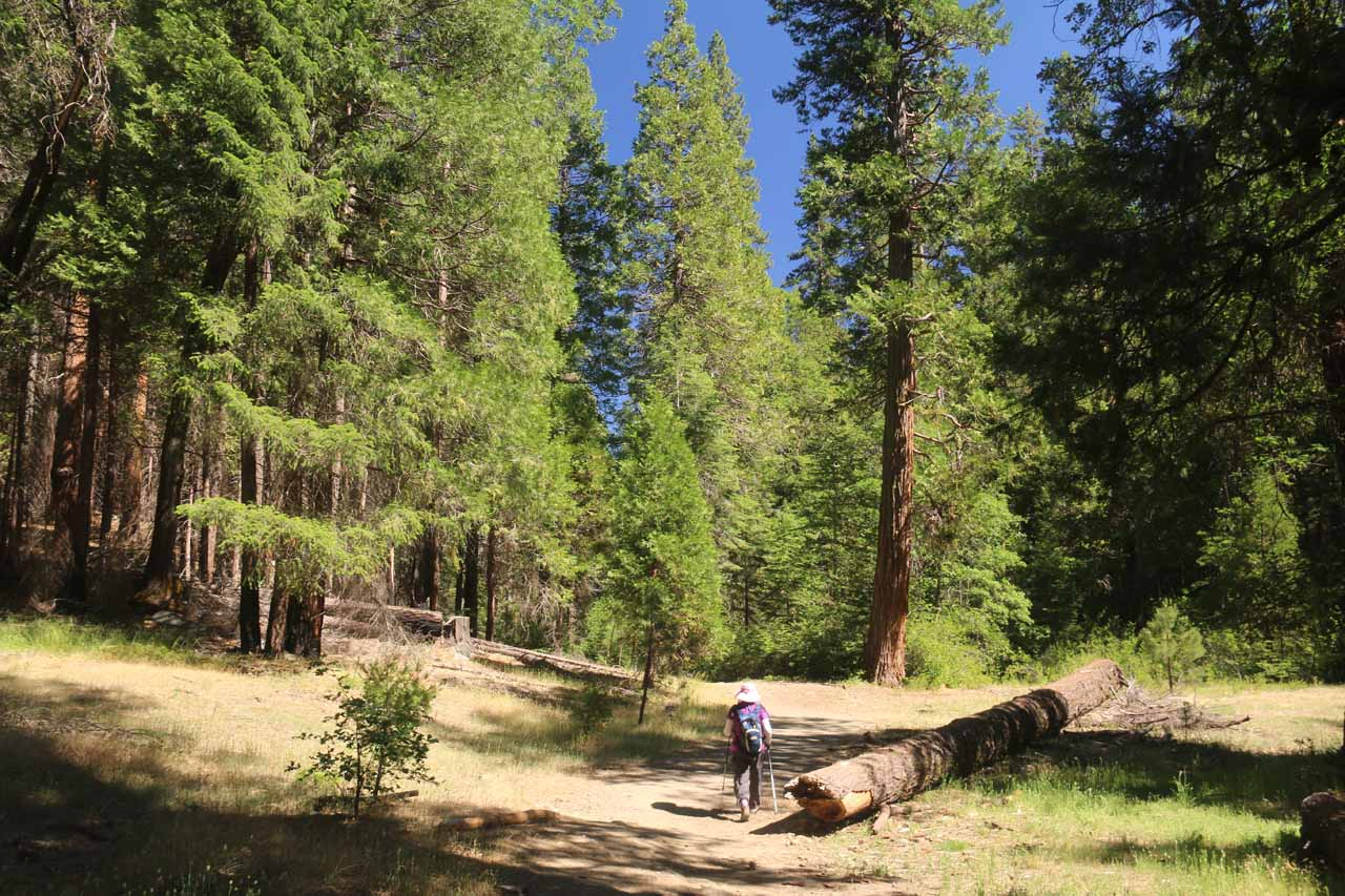 Initially the Carlon Falls Trail seemed to meander through a pretty healthy and intact forested area