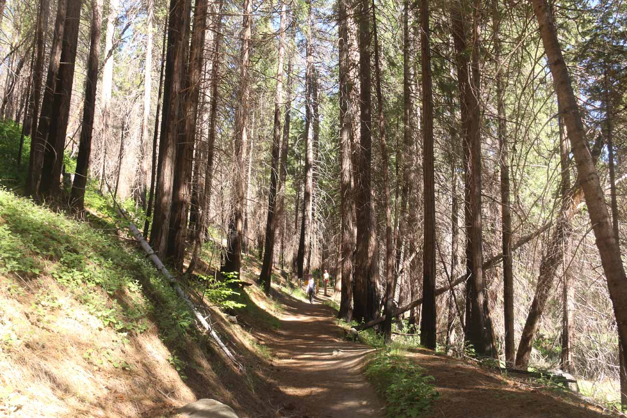But then the Carlon Falls Trail went into a burn zone just as we were approaching the Yosemite National Park wilderness boundary