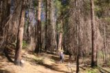 Carlon_Falls_17_017_06172017 - Even though the Carlon Falls Trail passed through a burn area affected by a 2013 fire, we still managed to get decent shade in the late afternoon