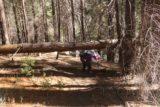 Carlon_Falls_17_047_06172017 - Mom going beneath another dead fall on the Carlon Falls Trail