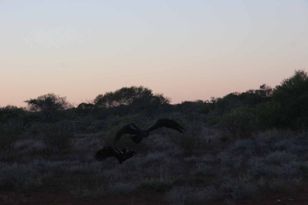 Some of those big black birds flying away as we were passing by