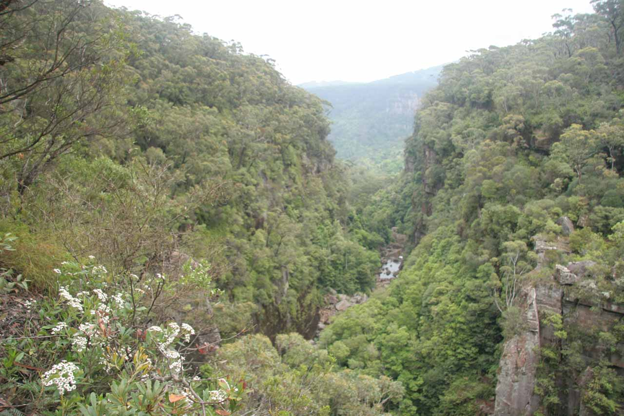 Looking downstream on the Kangaroo River from the top of Carrington Falls