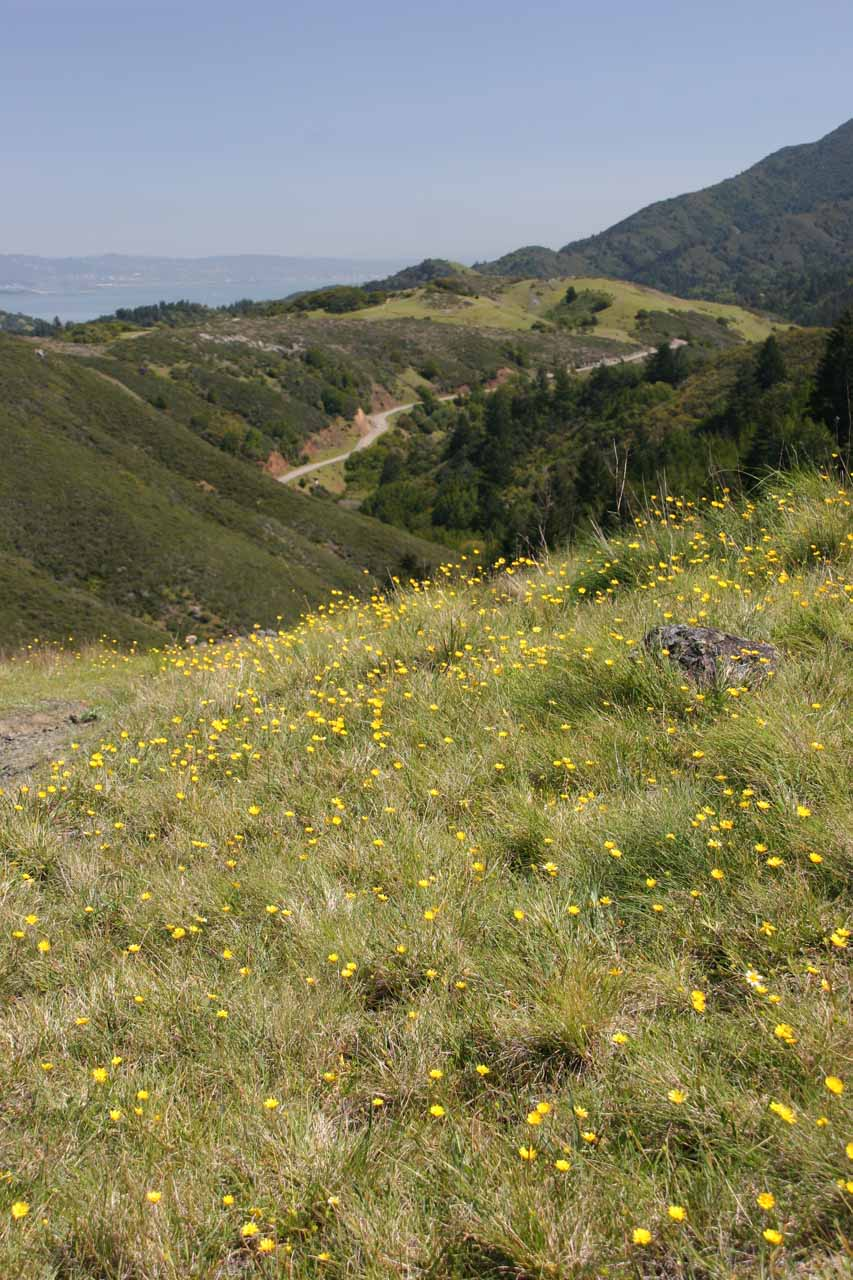 The view looking over wildflowers towards the bay and the Fairfax-Bolinas Road