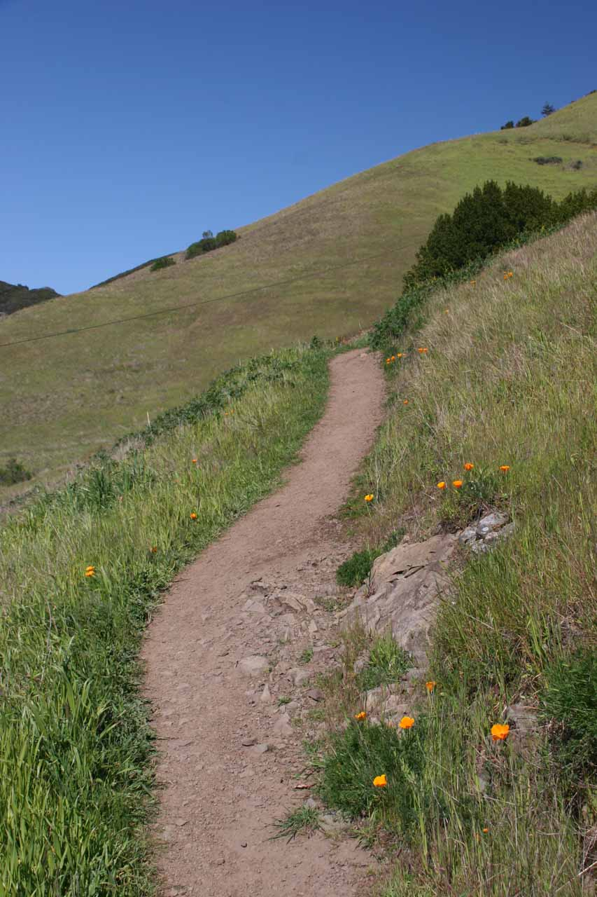 Some wildflowers flanking the trail as I headed back up to Oat Hill Road