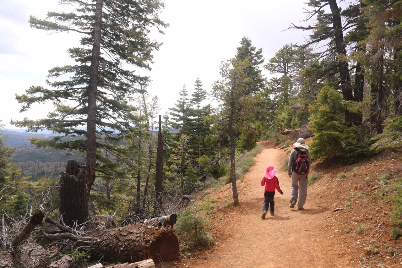 Initially, the Cascade Falls Trail meandered amongst trees while still offering a glimpse of the valley below in the direction of Kolob Terrace