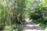 Cascade_de_Ba_002_11262015 - This was the bamboo stalk where there was a small space to stop the car, but unfortunately, we incorrectly identified this spot as the access point for Cascade de Ba