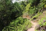 Cascade_de_Tao_026_11252015 - The bush trail leading closer to Cascade de Tao