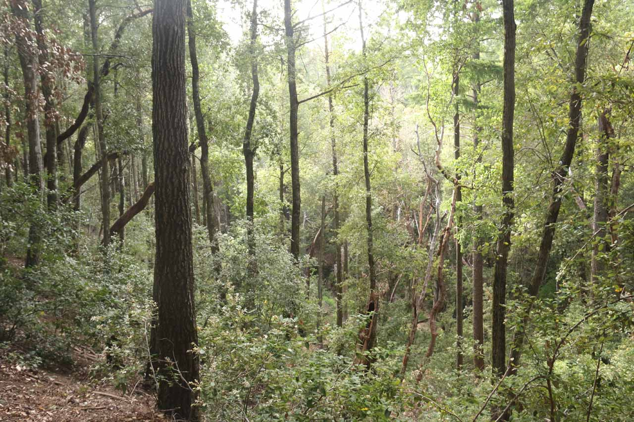 While on the Castle Rock Trail, we were able to look back at the density of trees as we climbed above the Saratoga Gap Trail
