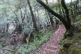 Cataract_Falls_100_04212019 - Looking back at the trail as it climbed higher than the Helen Markt Falls during my Cataract Creek hike in April 2019
