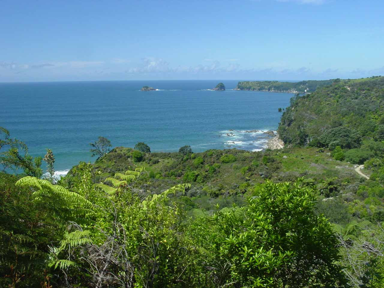 Gorgeous scenery along the trail to Cathedral Cove
