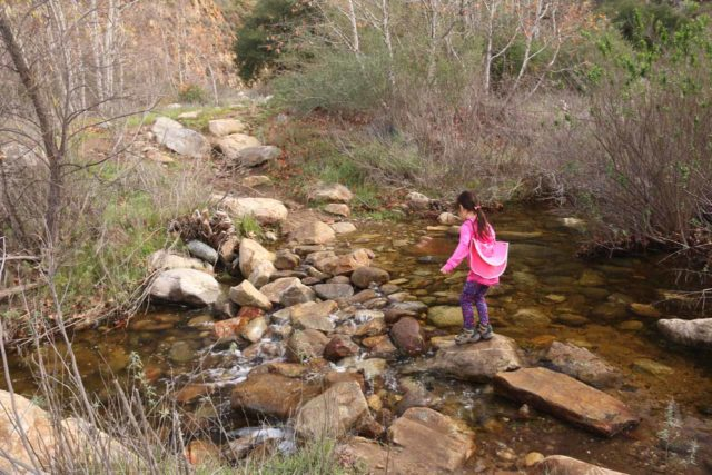 Cedar_Creek_Falls_099_01072017 - Tahia insisting on doing one of the crossings of Cedar Creek in the final half-mile by herself