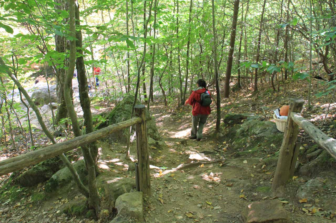 The spur trail to the overlook with the direct view of Chapman Falls was a little bit steeper and narrower, but still doable with our daughter