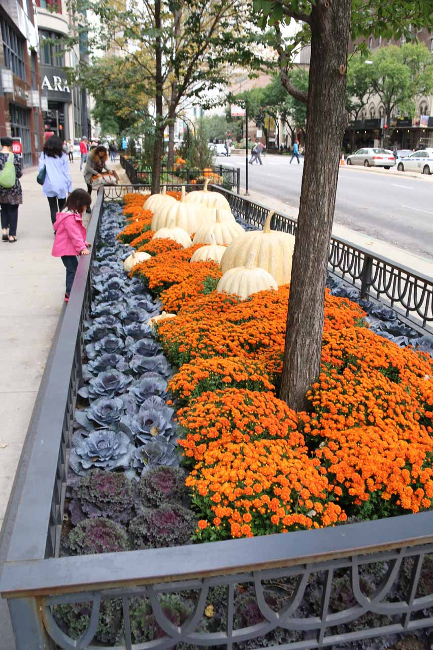 Flowers and pumpkins growing alongside Michigan Ave