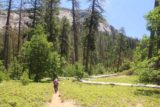 Chilnualna_Falls_17_355_06172017 - Mom passing through the low-lying shrubs full of flowers with Wawona Dome in the distance
