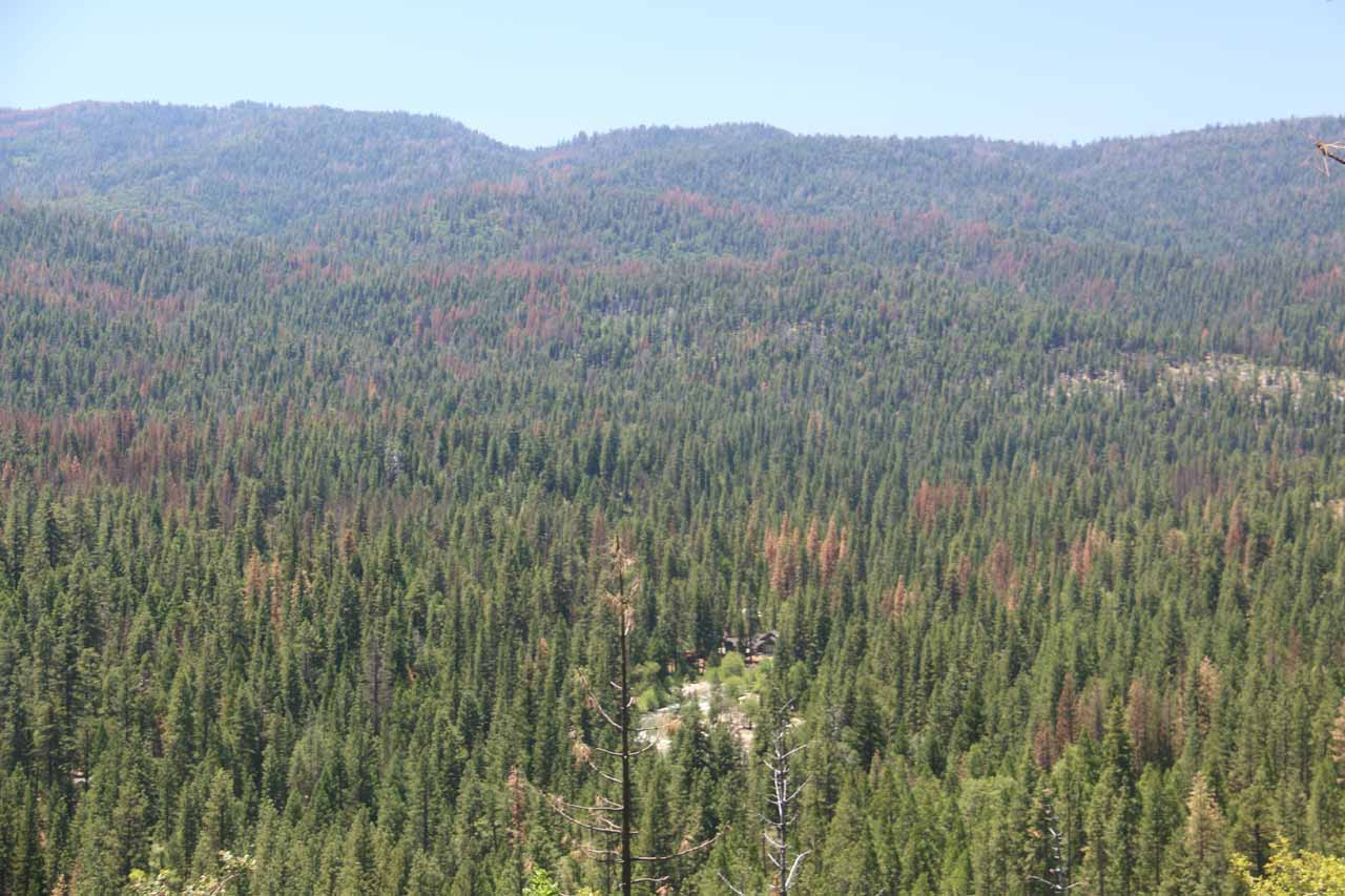 Looking down towards Wawona and the surrounding forest