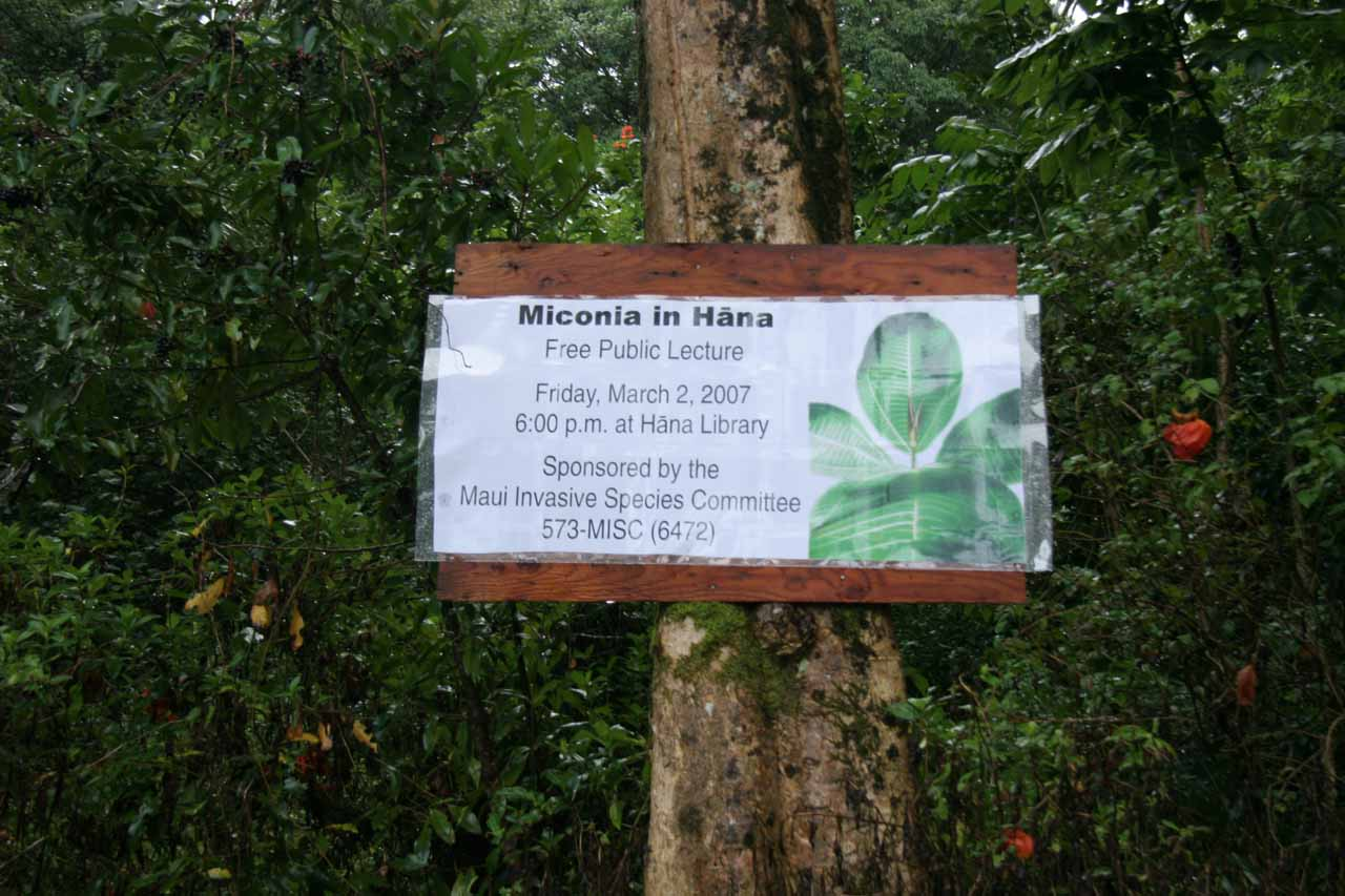 Miconia sign