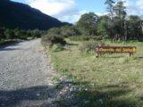 Chorrillo_del_Salto_009_jx_12212007 - Driving to Chorrillo del Salto or Cascada del Salto
