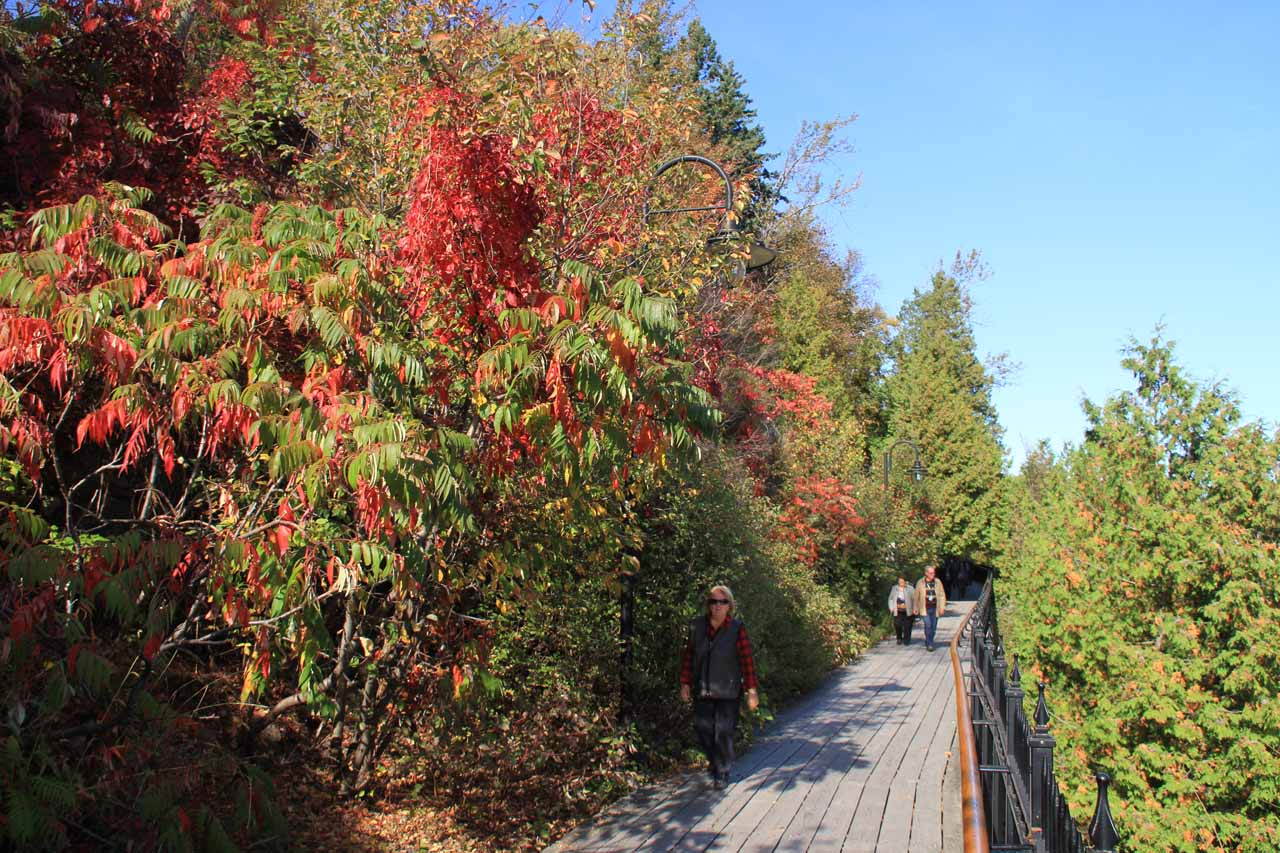 From the manor to the suspension bridge, the walkway was boardwalk (and flanked by beautiful vegetation with Autumn colors)