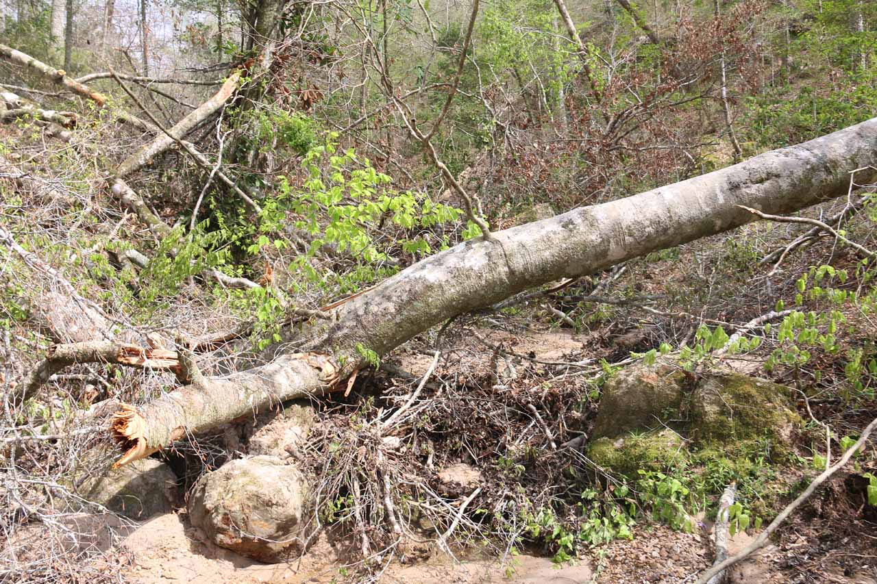 While making my way to the third Clark Creek Waterfall, I had to find a way around this fallen tree obstacle