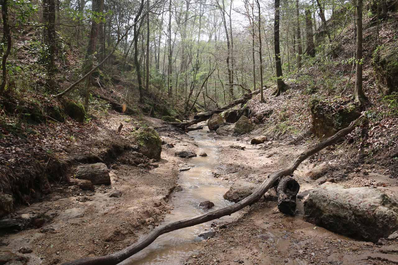 After visiting the third Clark Creek Waterfall, I had to backtrack on the stream scramble to get to the next fork in the stream