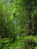 Colo-i-Suva_005_12272005