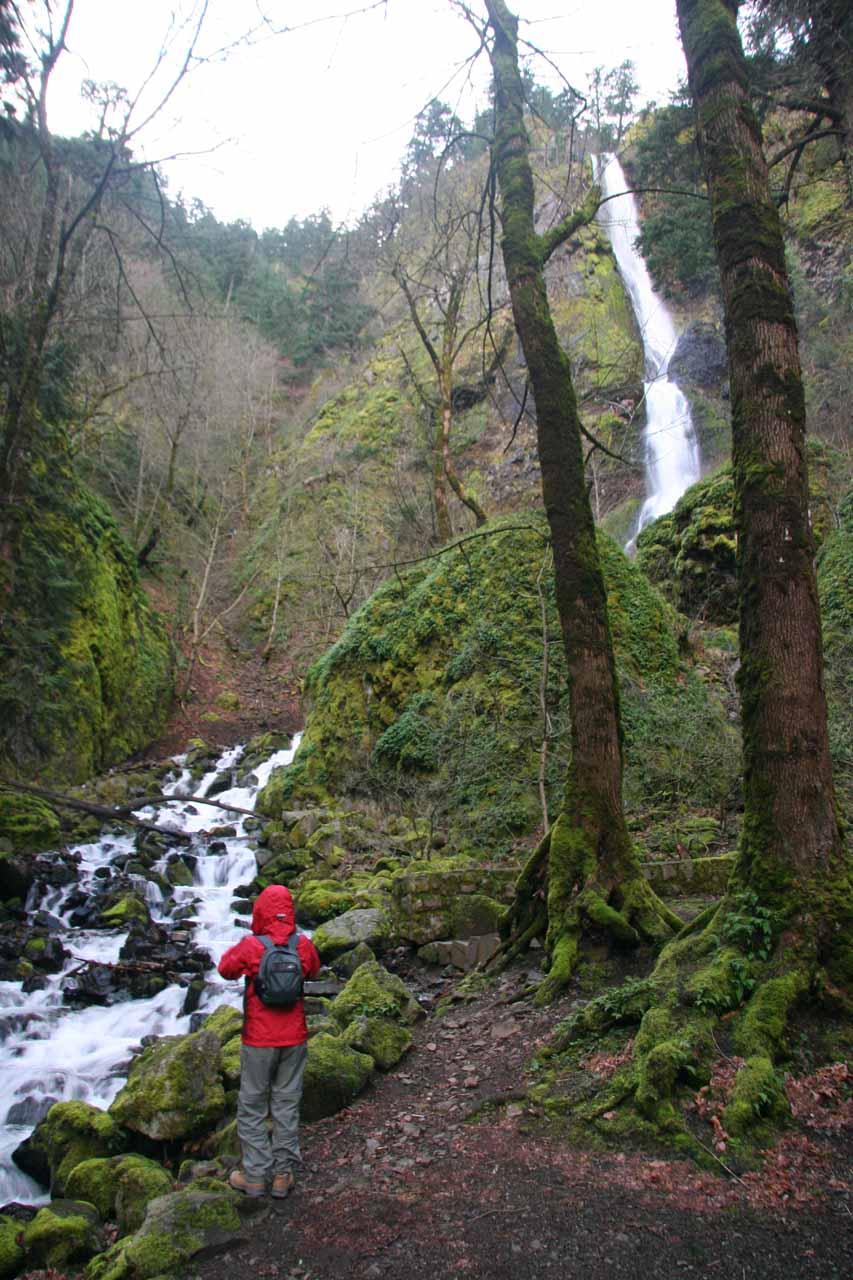 Julie checking out Starvation Creek Falls