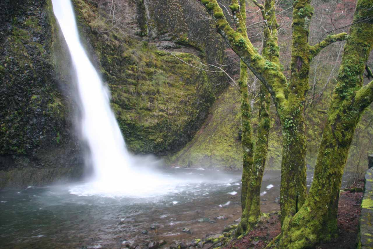 Lots of spray from Horsetail Falls results in mossy trees here