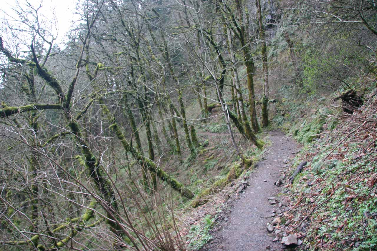 This was a look along the Oneonta Trail when I first did this hike in March 2009