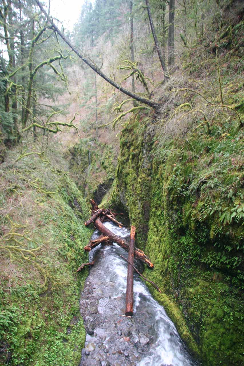 Looking downstream into the Oneonta Gorge with a small logjam just above where the Lower Oneonta Falls brink was