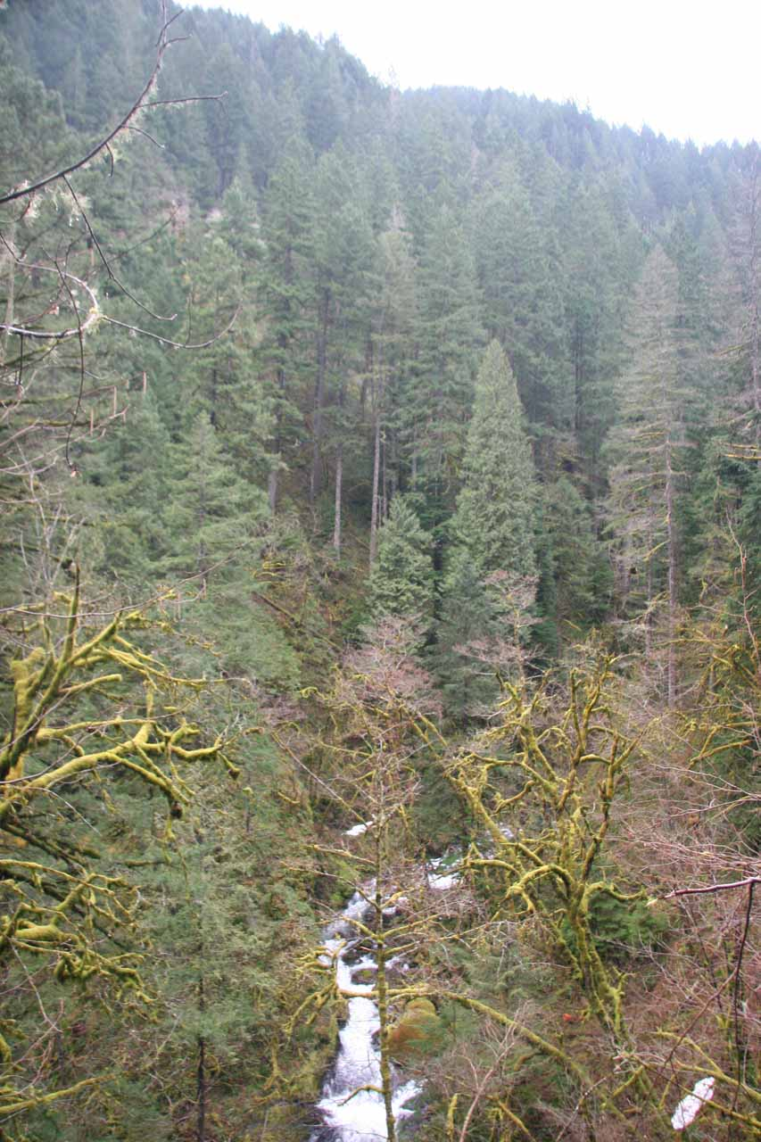 Looking towards Oneonta Creek somewhere closer to Triple Falls (seen in March 2009)