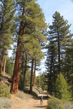 Cooper_Canyon_13_017_03172013