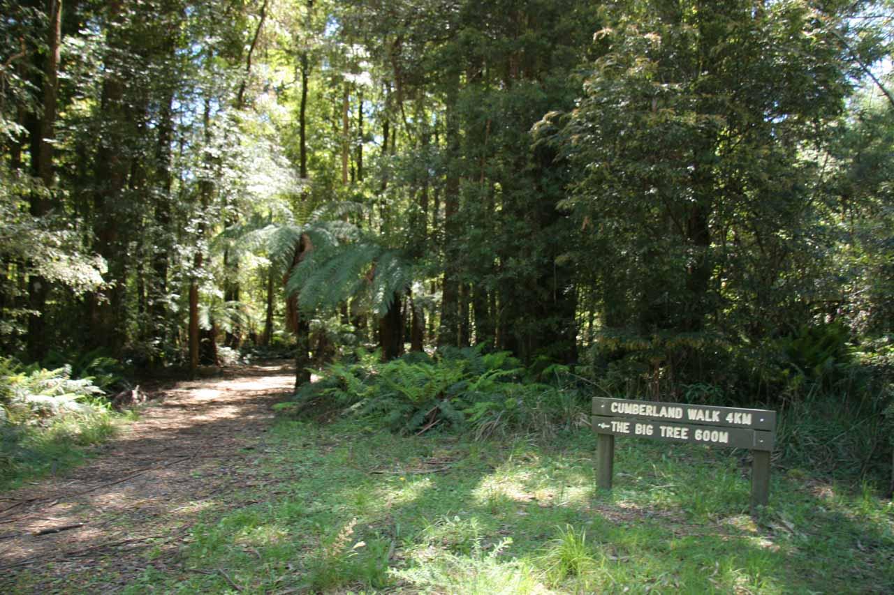 At the start of the Cora Lynn Falls walk