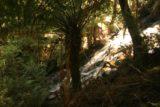Cora_Lynn_Falls_021_11102006 - Looking through the shadows at Cora Lynn Falls