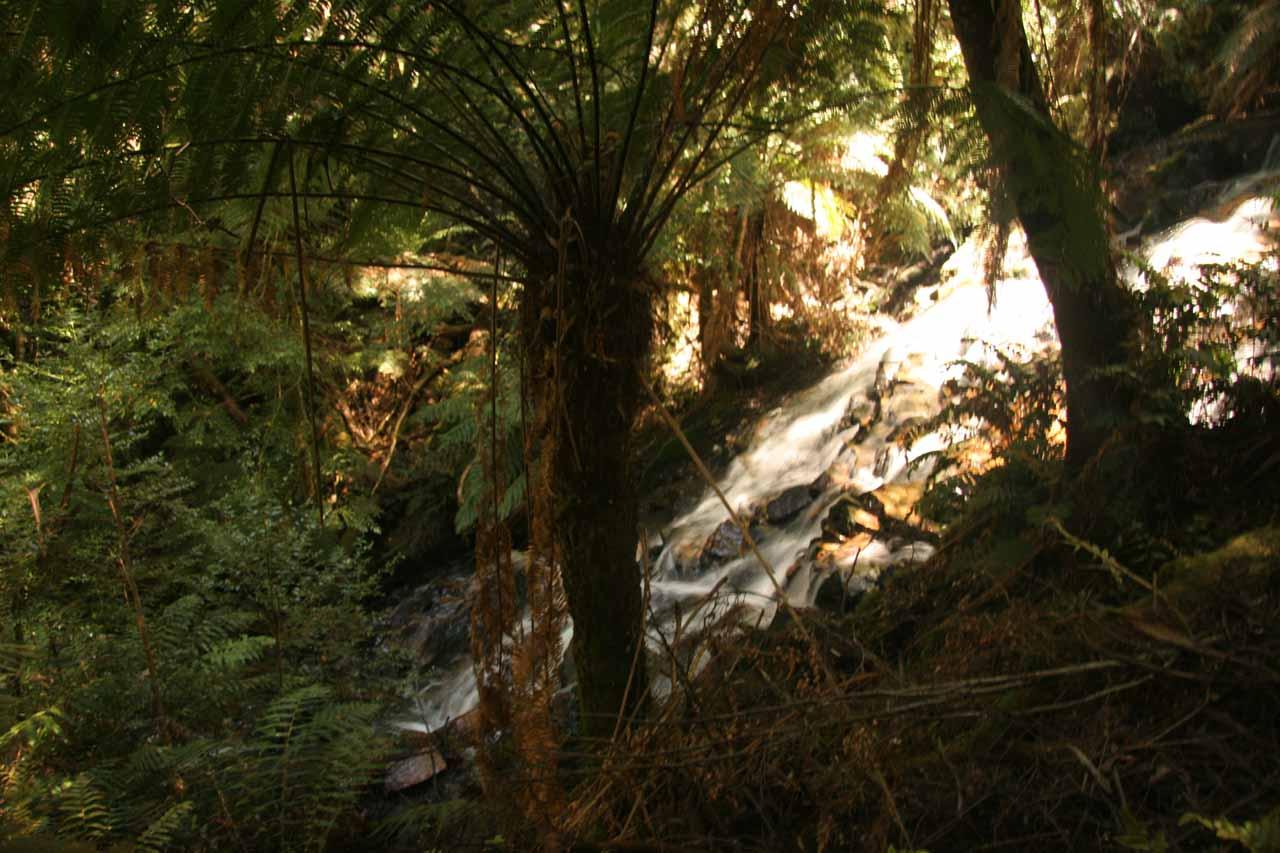 Looking through the shadows at Cora Lynn Falls
