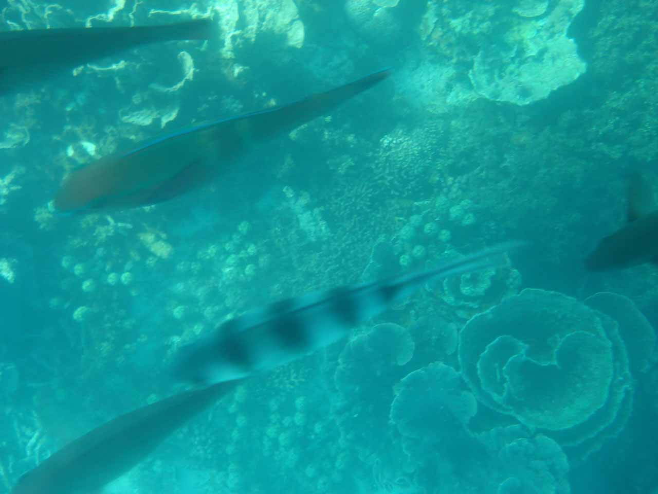 More fish on the Ningaloo Reef