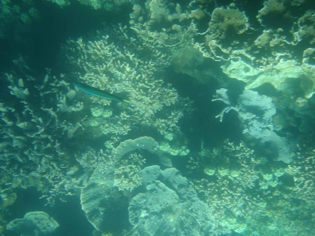 Interesting formations on the Ningaloo Reef