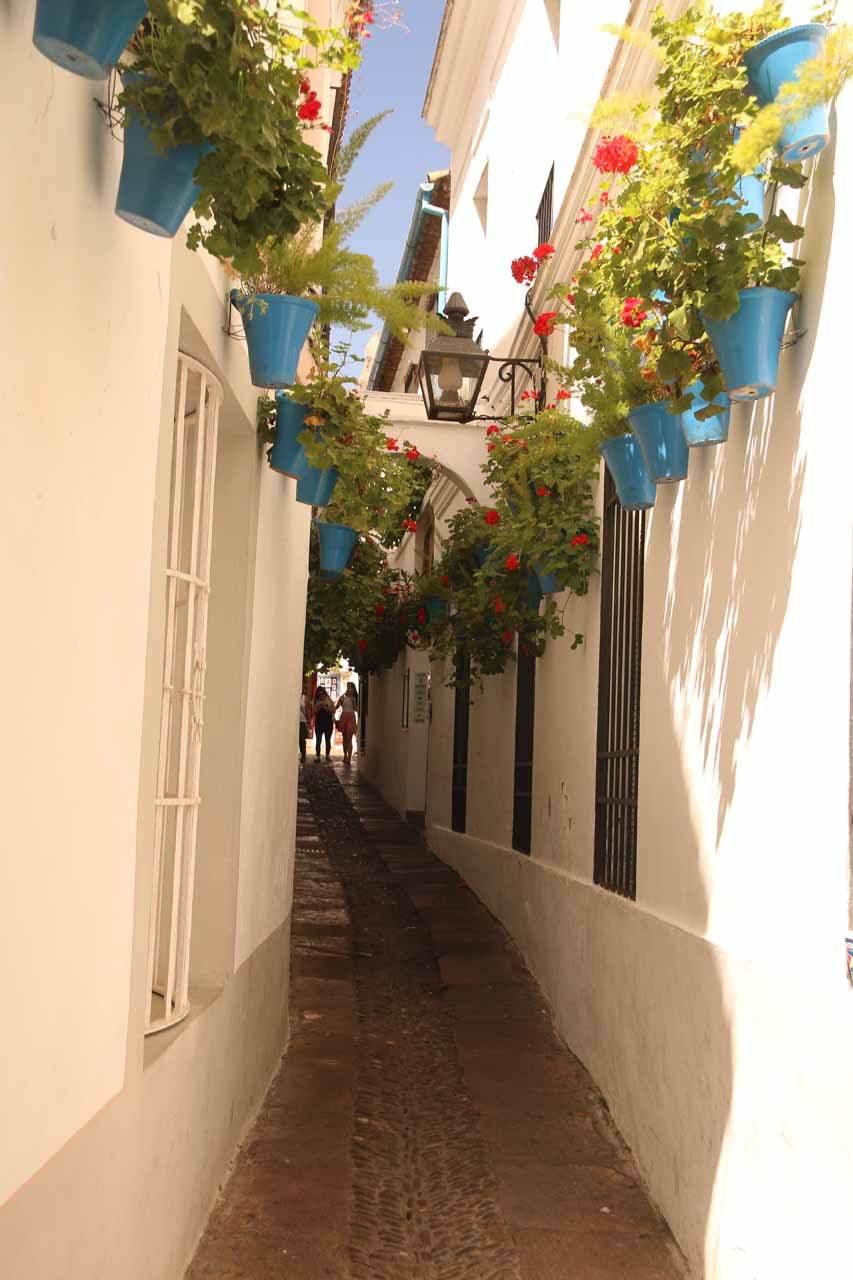An attractive rose-lined alleyway in La Juderia of Cordoba