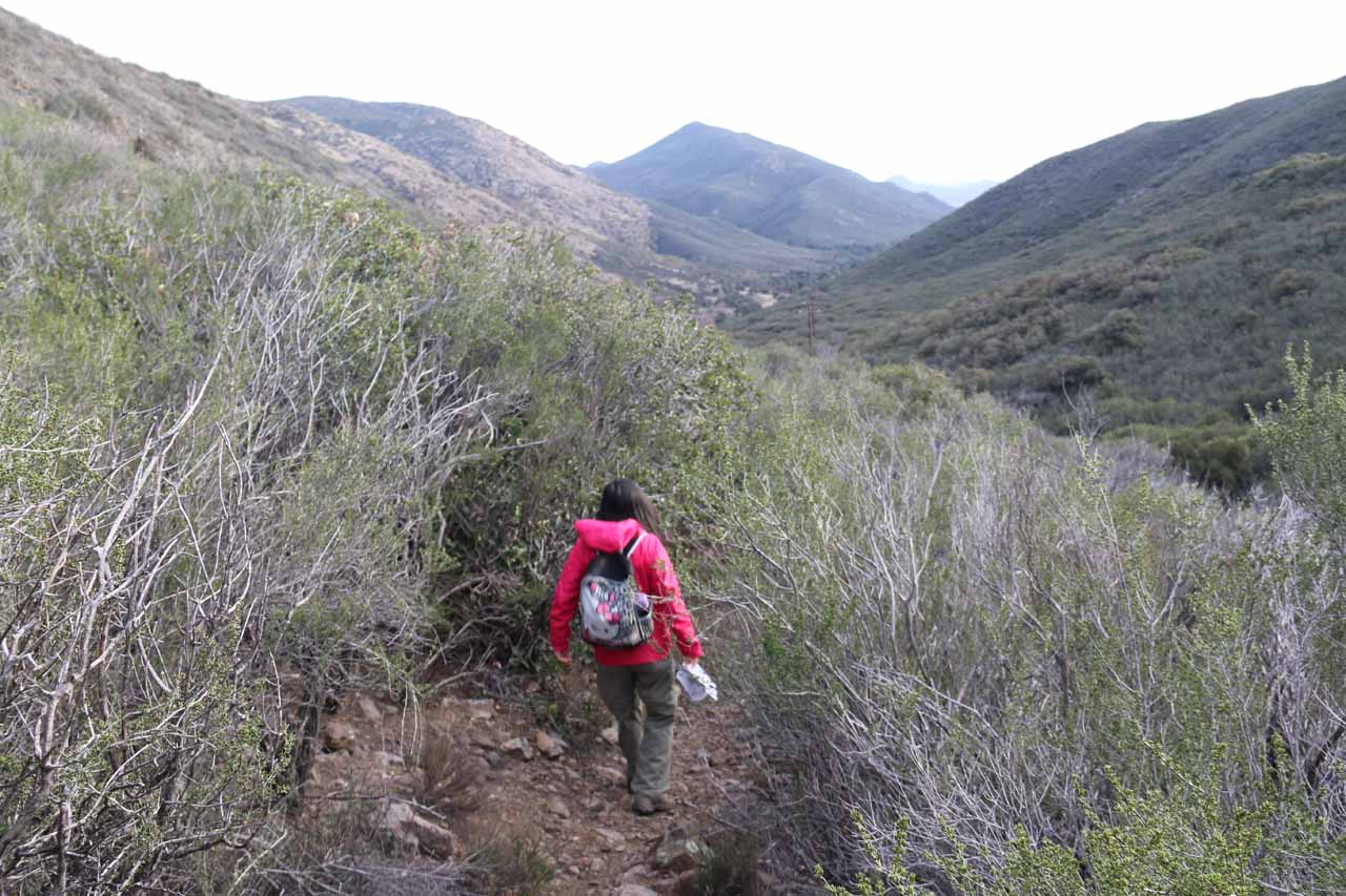 Julie following the faint trail through the thick prickly brush on the initial descent