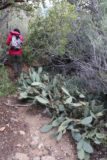 Cottonwood_Creek_Falls_027_01232016 - Julie dodging this unfortunately-situated cactus patch right next to the overgrown trail