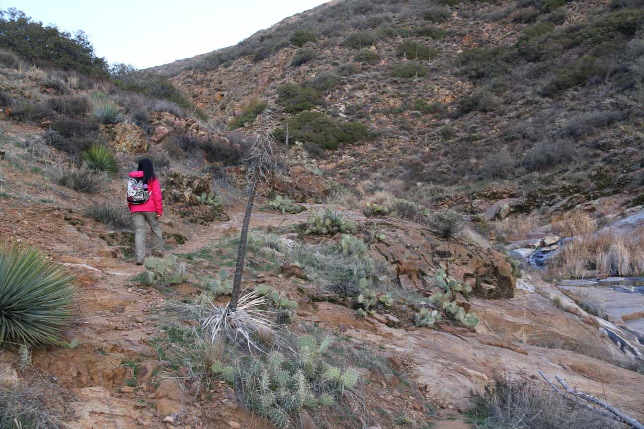Julie dodging cacti and continuing further upstream alongside more of the waterfalls on Cottonwood Creek