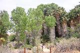 Cottonwood_Springs_035_05182019