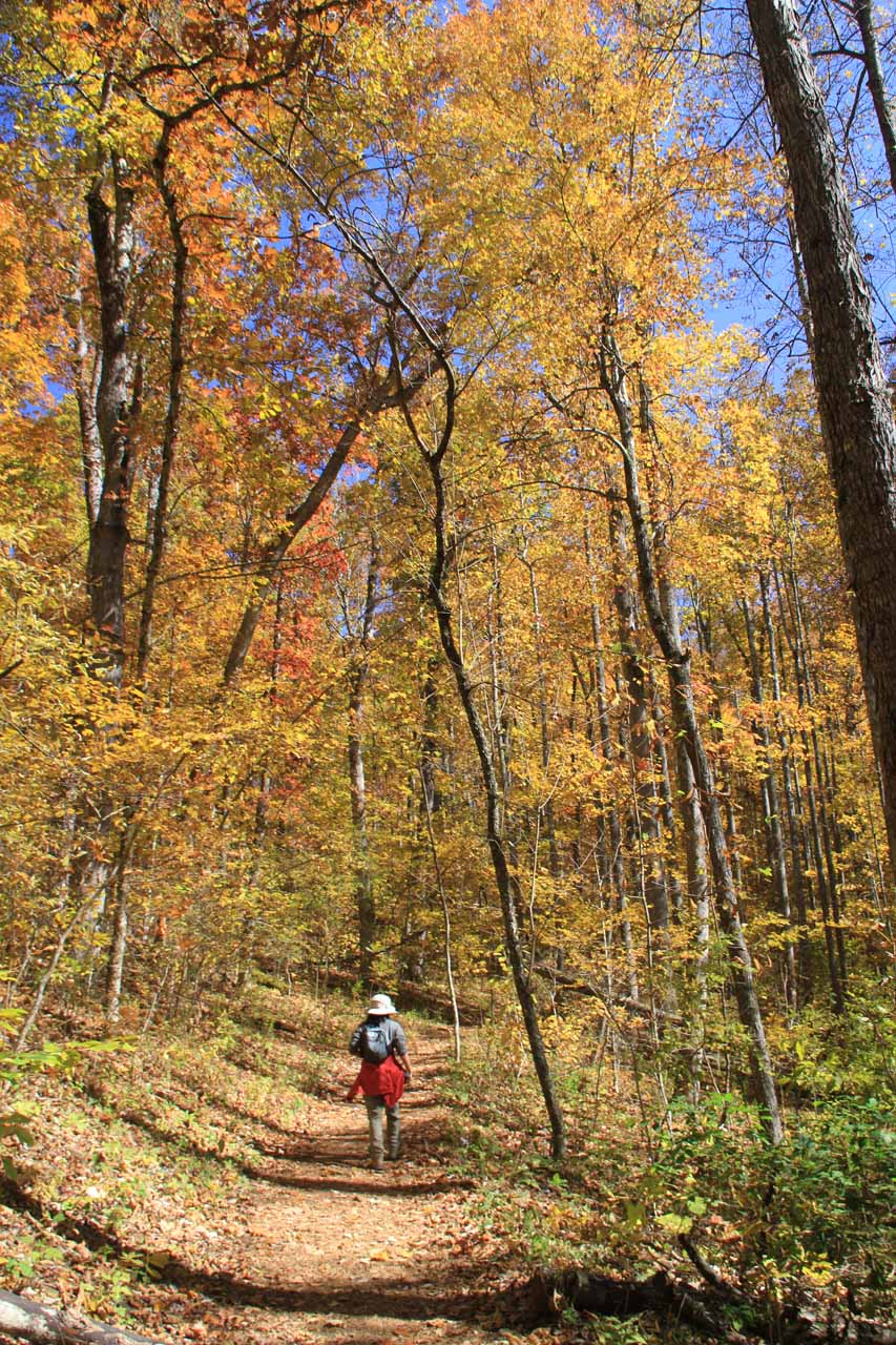 Julie hiking back towards the trailhead under trees with gorgeous Autumn colors