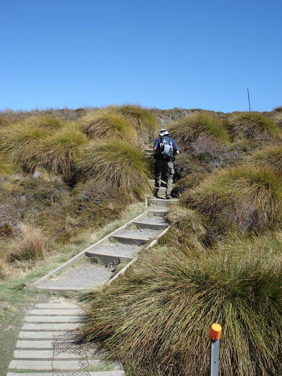 The track eventually started climbing as we started to leave the tussock fields and into some groves of forest