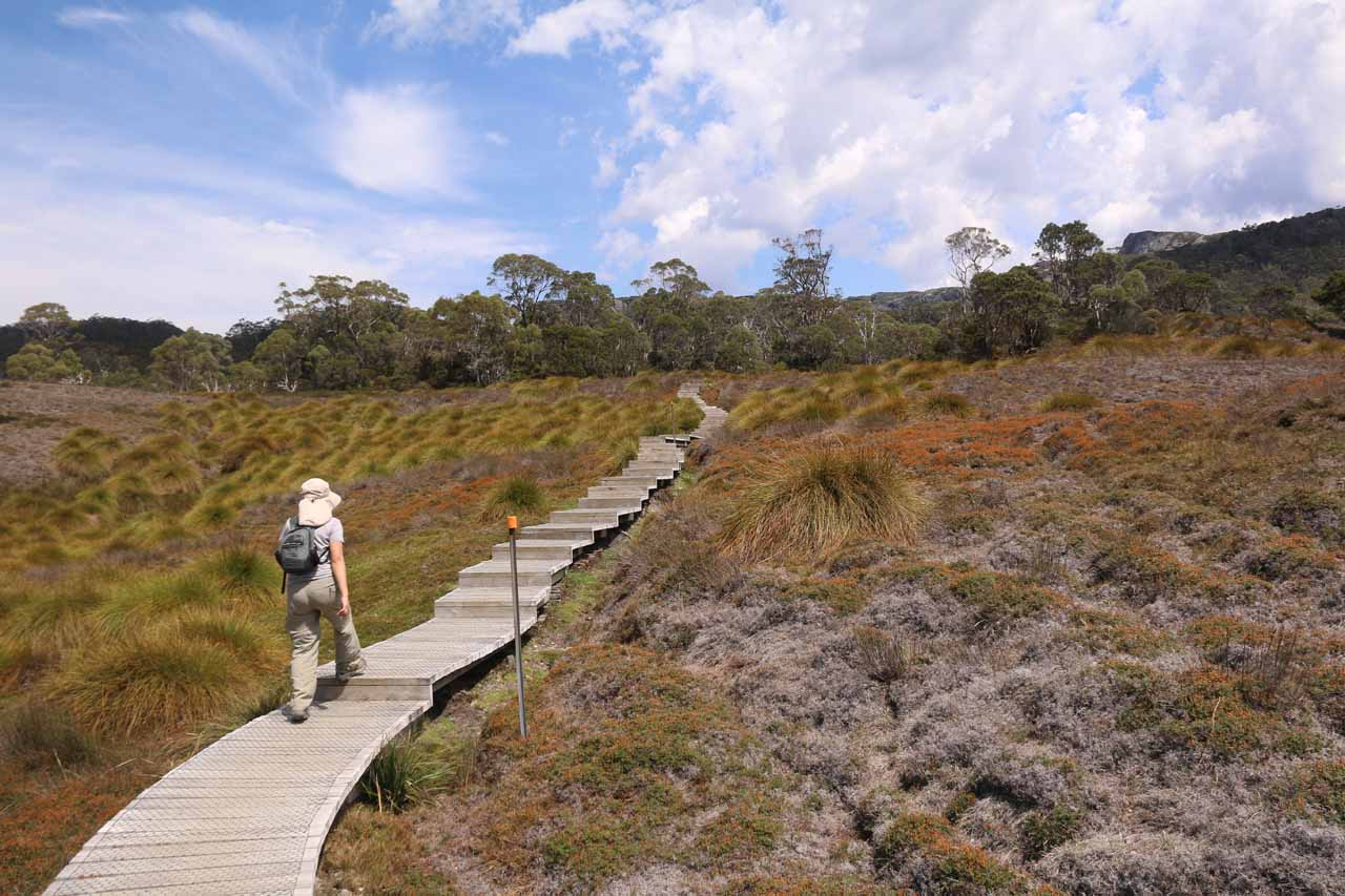 The Overland Track continued to climb towards the forest up ahead