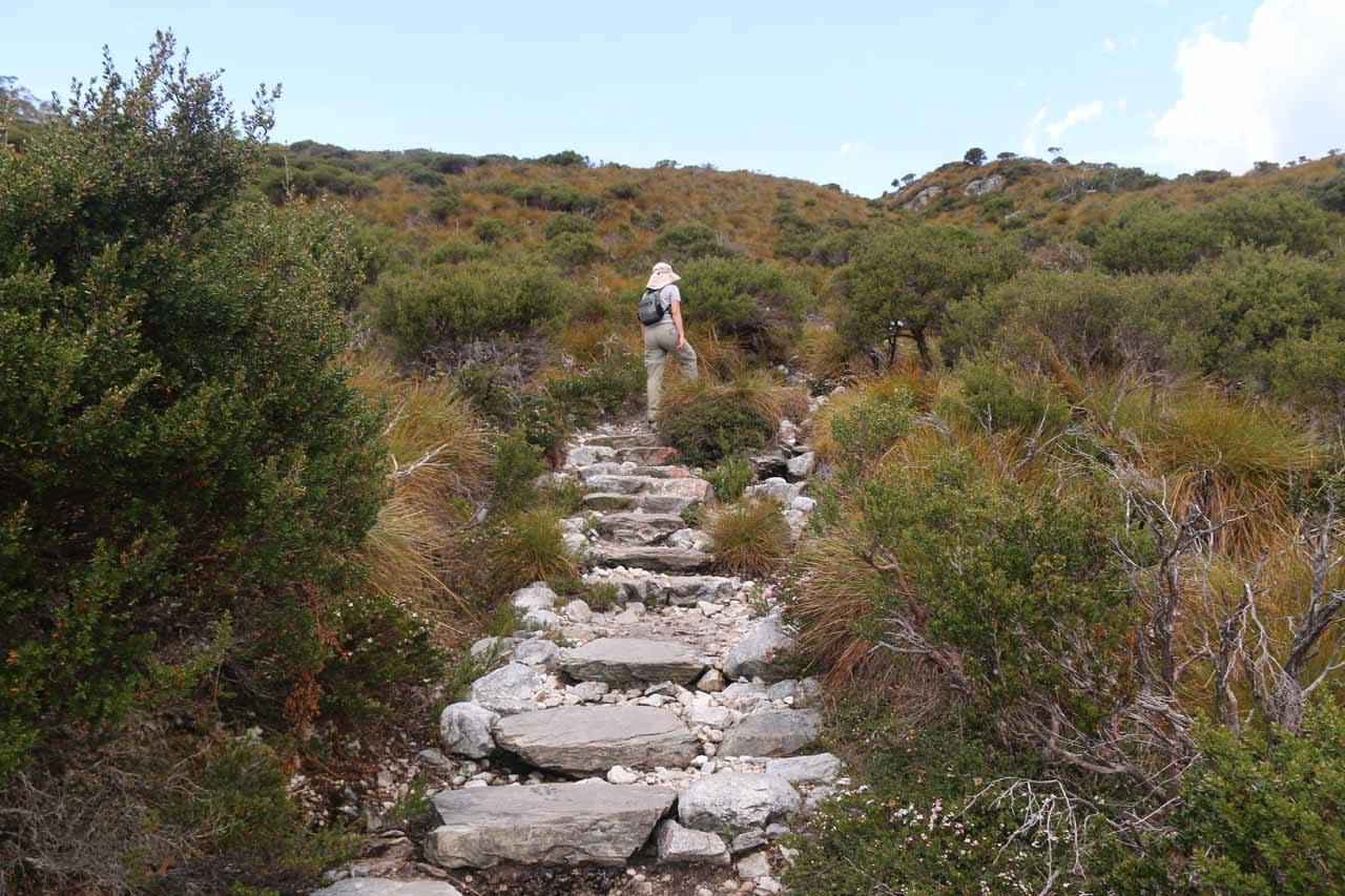 The Overland Track continued its persistent climb as we left the buttongrass behind and the vegetation turned to bushlands