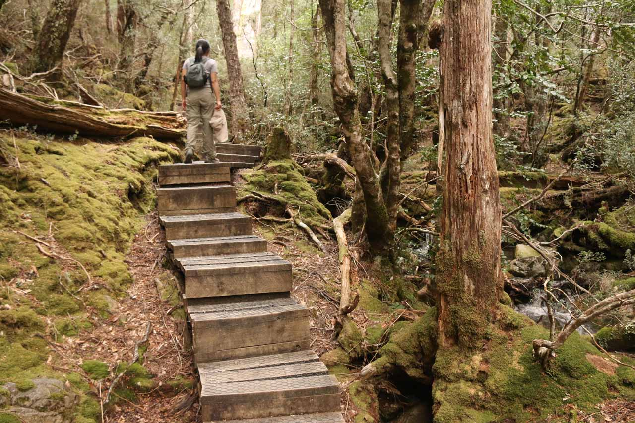 Once we climbed high enough above the bushlands, we then went on this boardwalk amongst forested scenery alongside Crater Creek