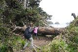 Crescent_Beach_065_04072021 - Tahia and Julie climbing over one of the handful of fallen trees blocking the 'scenic path' to Crescent Beach