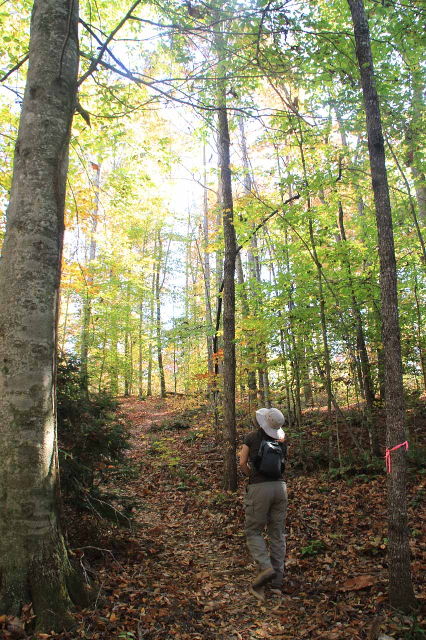 Following the pink ribbons through the forested trail