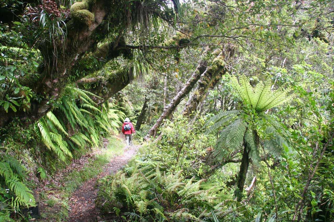 Julie on the bush walk towards Curtis Falls