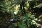 Cyathea_Falls_003_11112006 - Julie on the rainforest walk to Cyathea Falls